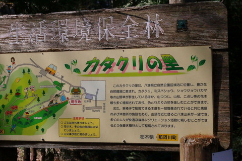 咲き誇る春のカタクリの里!(栃木県那須郡那珂川町)