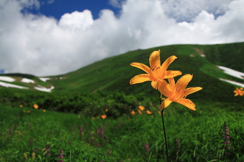 2014夏!・月山で遊山(花畑・岩魚釣り・酒宴の極み!)(前編)