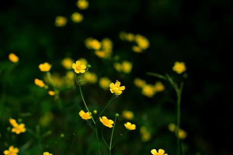 里山の森_19.05.16_178