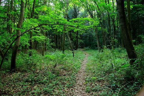 里山の森_19.05.16_363