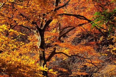 八溝の森は秋色に輝いていた!(日輪寺界隈)