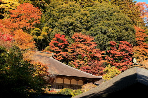 臨済宗妙心寺派の寺院:雲巌寺の秋色を見つめた。