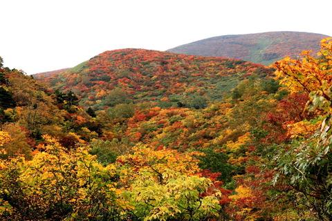 栗駒山(曇り空でも秋色冴え渡る)