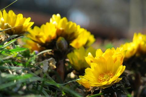 春を探して、里山散策:喜連川丘陵を歩む!