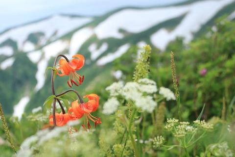飯豊連峰(大日杉~御西小屋)往路で花畑を楽しむ!