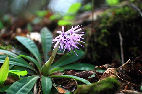 那須(日本百名山:ときめきの花たちと、自分のこころもときめいた!))