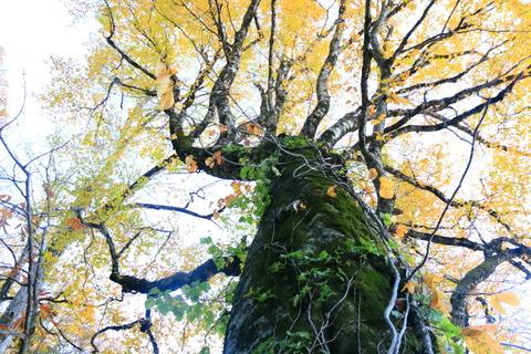 浅草岳(素晴らしきブナの森、神秘の沼を歩いた!)
