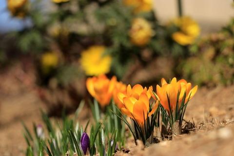 春色のお花が咲いた我が家の庭先!