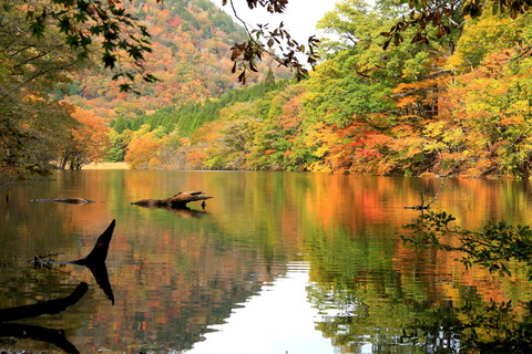 満水の湖沼と秋色目白押し!(大沼&ヨシ沼)