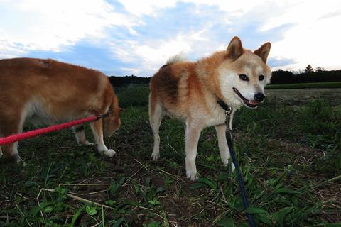 夕焼け散歩(09月20日)