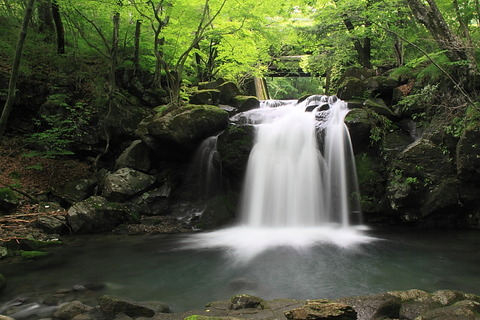 高原山山塊(宮川渓谷~ミツモチ山:清らかな流れとコアジサイ群生、深緑のブナの森!)