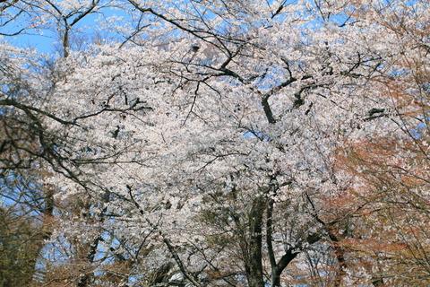 春の良き日に、喜連川丘陵の里山をサイクリング!