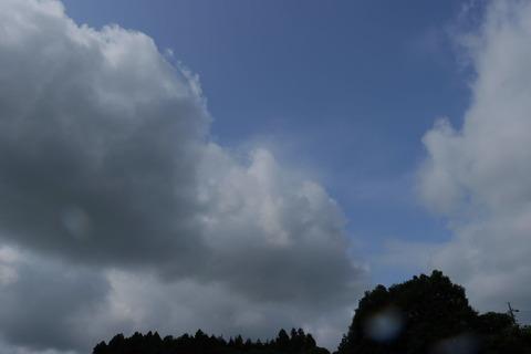里山の森_2021.07.14_173
