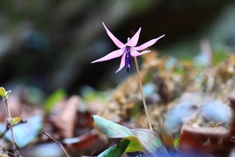 春の陽気に包まれた、妖気に振る舞う春の花たち!(古賀志山)