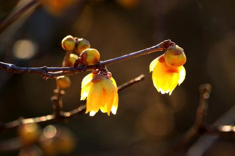 陽だまりの森で春を見つけた!(里山の森)