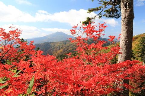 会津駒ヶ岳(ベストタイミング~秋の色~ぉ!:日本百名山)