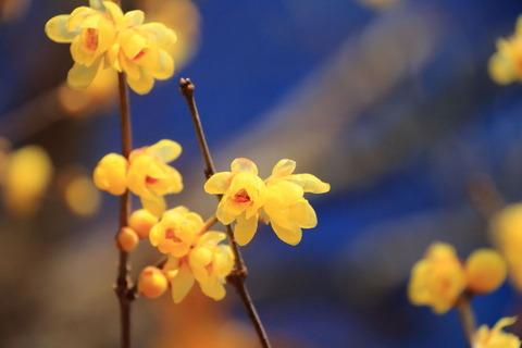 羽黒山(栃木百名山:ロウバイの咲く早春の園)