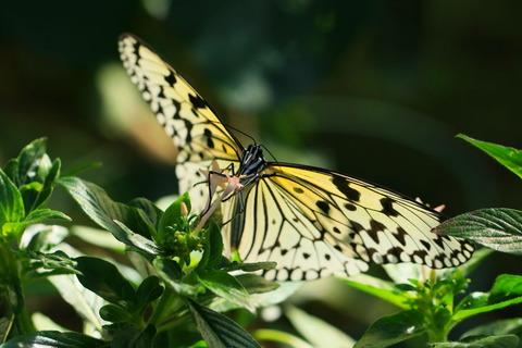 蝶の楽園を楽しむ!(井頭公園・花ちょう遊館)