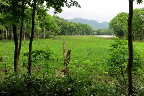 静かな初夏の湿原、矢ノ原湿原を歩く!