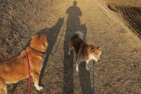 今日も夕焼け散歩!  夕日の見える丘にて(#^^#)
