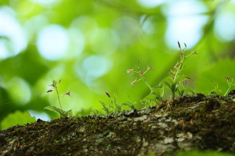 とある森でクモイジガバチ(雲居似我蜂)