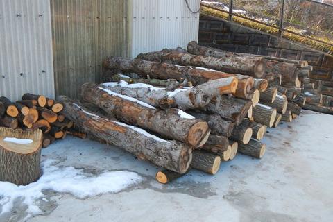 来冬のための薪づくり(玉切り作業)