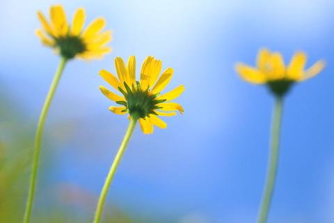 夏のお花に巡り合う!(裏那須:ミニ飯豊を歩く)