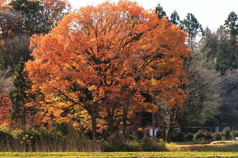 初冬の森から晩秋の森へ歩く(喜連川丘陵で里山散歩)