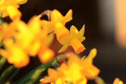 夕照のお花たち(我が家の庭先にて(^_-)-☆!)