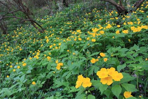 春の花咲く小径を歩いた!(栃木県さくら市・喜連川丘陵)