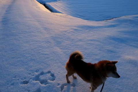 愛犬と夕焼け散歩!