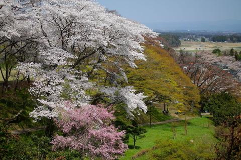 佐久山御殿山公園でお花見✿(栃木県大田原市)