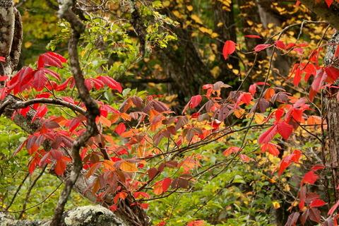 秋色が進む森の中(標高980ⅿ:大沼園地&ヨシ沼園地)