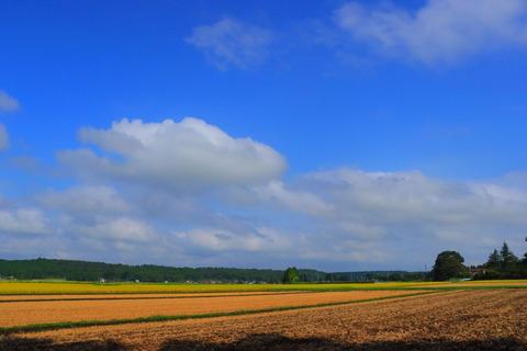 晴れた午後だから、里山散歩!(喜連川丘陵)