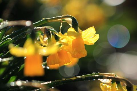 降霜の朝と陽だまりの庭先!