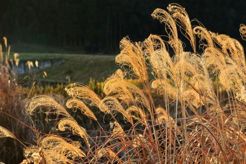 午後の里山散歩!(里山の森と夕照と(*^。^*))