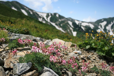 北アルプス白馬岳を縦走する!(2006年夏の記録)