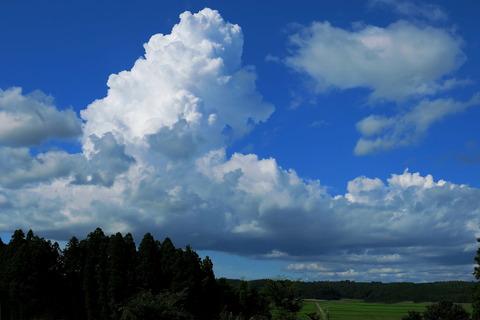 夏空を見ながら!(里山の森散策)
