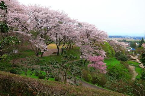 佐久山城址公園にて、お花見散策!