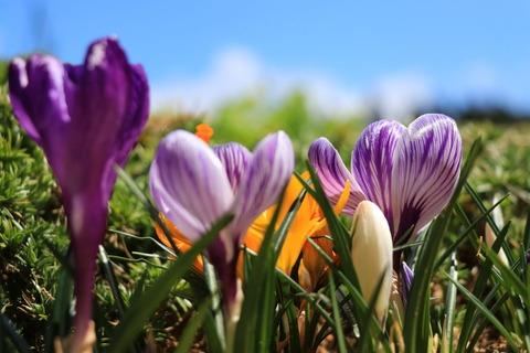 庭先のお花で癒しの時間(^_-)-☆!