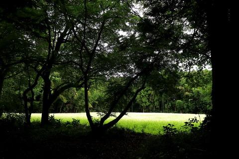 里山の森_20.09.26_301