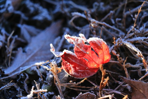 降霜の朝、里山散歩(栃木県北喜連川丘陵にて)