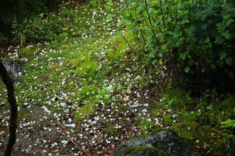 自宅庭先に降雹となる!