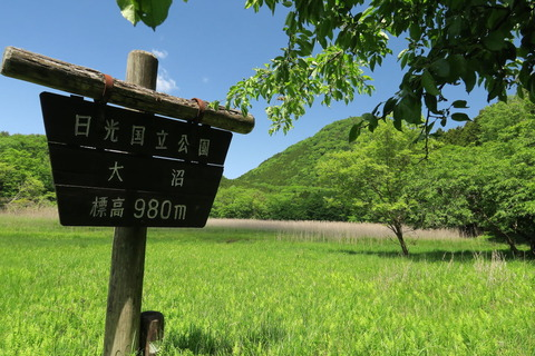 深緑の森をお散歩!(大沼&ヨシ沼園地)