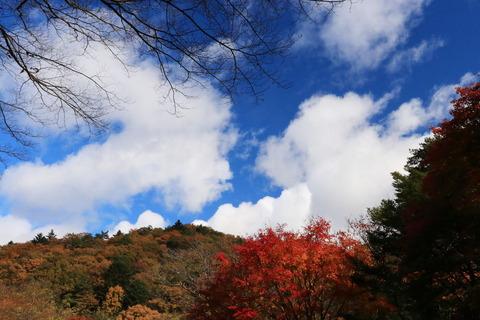 お山での今季最後の紅葉か~ぁ。塩原渓谷歩道を歩む!