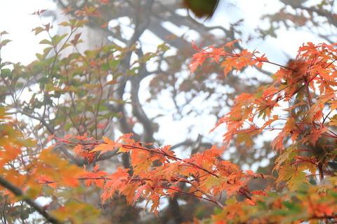 栃木百名山釈迦ヶ岳で小さな秋を拾い集めてきました!