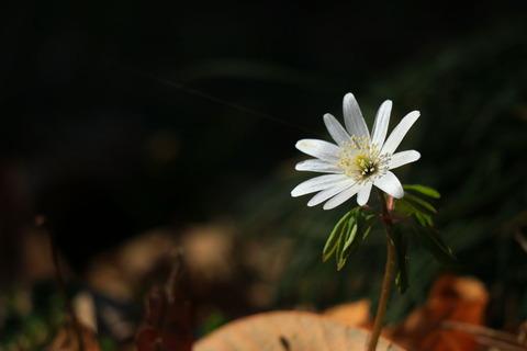 身近な春のお花たち!(喜連川丘陵で里山散歩)