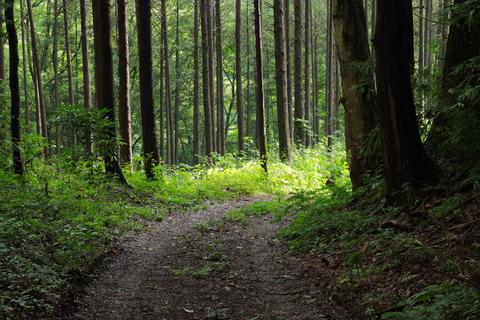 里山の森_2021.07.14_042