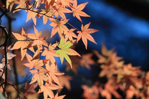 秋の紅葉狩り!(栃木県大田原市佐久山御殿山公園)