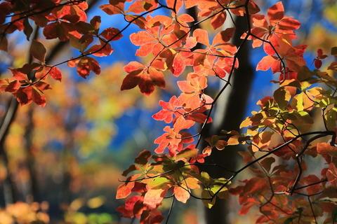 鶏岳(栃木百名山:とっても小さな山だけど、紅葉きれいだった~ぁ!)